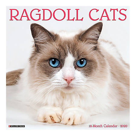 "Willow Creek Press Animals Monthly Wall Calendar, 12"" x 12"", Ragdoll Cats, January To December 2020"
