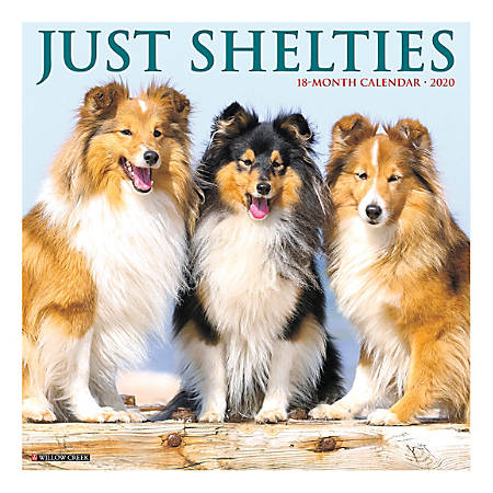 """Willow Creek Press Animals Monthly Wall Calendar, 12"""" x 12"""", Shelties, January To December 2020"""
