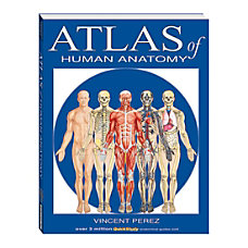 QuickStudy Atlas Of Human Anatomy