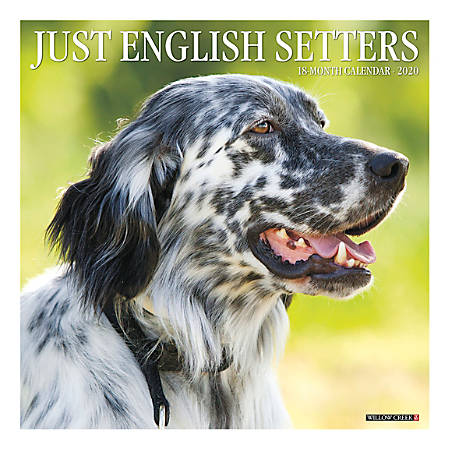 """Willow Creek Press Animals Monthly Wall Calendar, 12"""" x 12"""", English Setters, January To December 2020"""