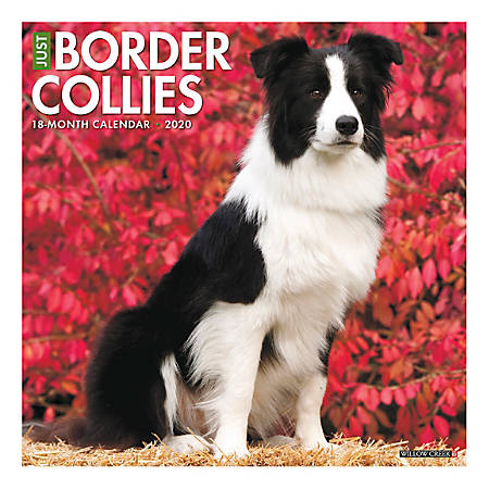 "Willow Creek Press Animals Monthly Wall Calendar, 12"" x 12"", Border Collies, January To December 2020"