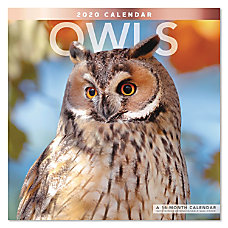 Mead Owls Monthly Wall Calendar 12