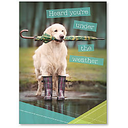 Viabella Get Well Greeting Card Dog