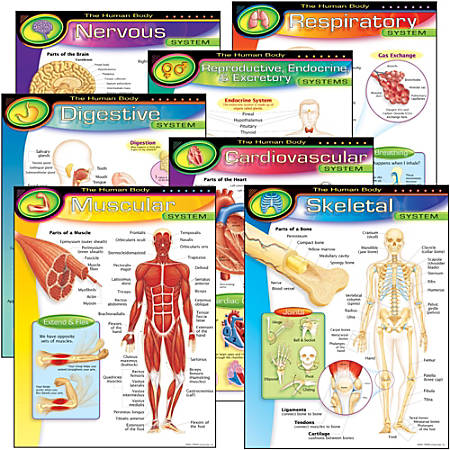 Trend® Learning Chart Pack, The Human Body