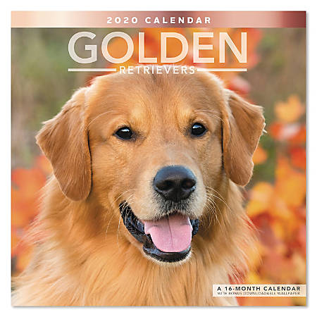 "Mead® Golden Retrievers Monthly Wall Calendar, 12"" x 12"", January to December 2020, ODE322-10"