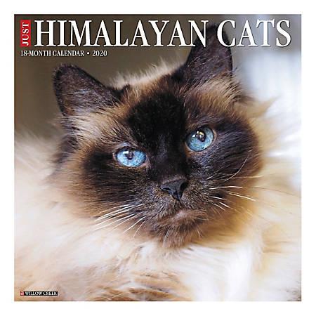 """Willow Creek Press Animals Monthly Wall Calendar, 12"""" x 12"""", Himalayan Cats, January To December 2020"""