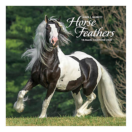 """Willow Creek Press Animals Monthly Wall Calendar, 12"""" x 12"""", Horse Feathers, January To December 2020"""