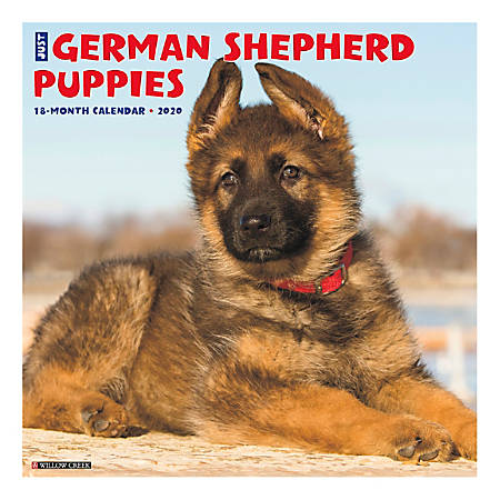 "Willow Creek Press Animals Monthly Wall Calendar, 12"" x 12"", German Shepherd Puppies, January To December 2020"