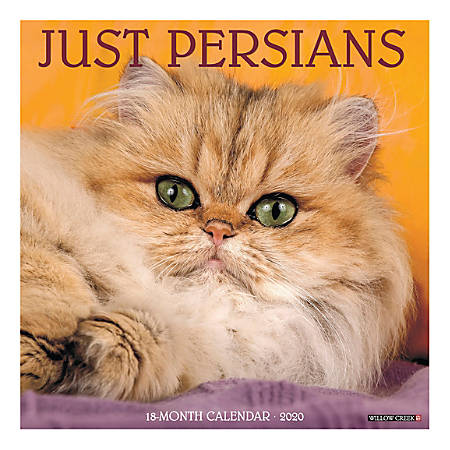 """Willow Creek Press Animals Monthly Wall Calendar, 12"""" x 12"""", Persians, January To December 2020"""