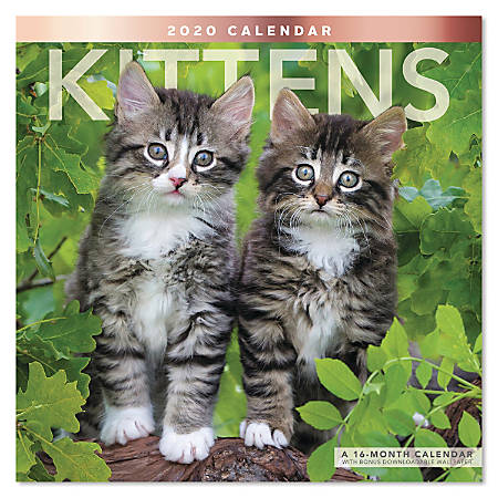 "Mead® Kittens Monthly Wall Calendar, 12"" x 12"", January to December 2020, ODE134-10"