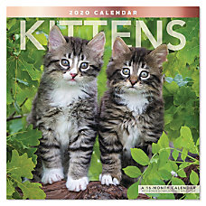 Mead Kittens Monthly Wall Calendar 12