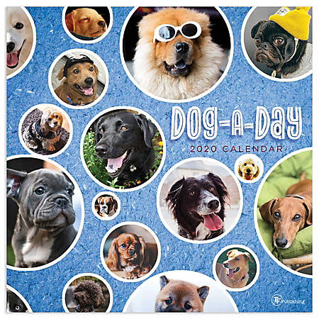"""TF Publishing Monthly Wall Calendar, 12"""" x 12"""", Dog-A-Day, January To December 2020"""