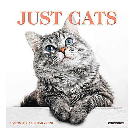 """Willow Creek Press Animals Monthly Wall Calendar, 12"""" x 12"""", Cats, January To December 2020"""