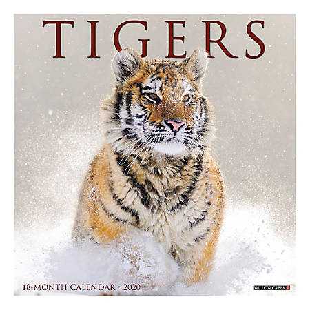 """Willow Creek Press Animals Monthly Wall Calendar, 12"""" x 12"""", Tigers, January To December 2020"""
