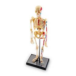 Learning Resources Human Skeleton Model Grade