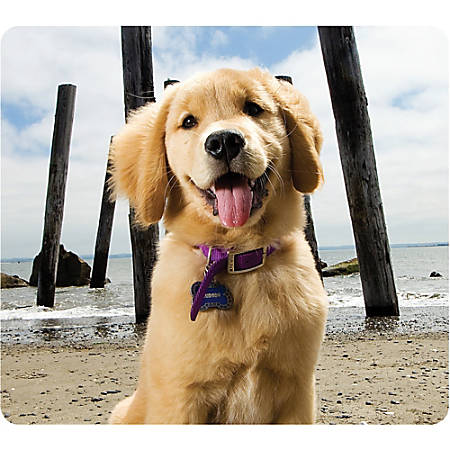 "Fellowes Recycled Mouse Pad - Puppy at Beach - Puppy - 8"" x 9"" x 0.1"" Dimension - Multicolor - Rubber Base - Slip Resistant, Scratch Resistant, Skid Proof"